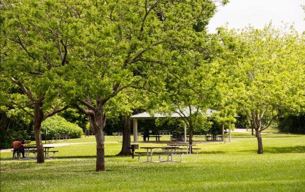 Cullinan Park │ Top Picnic Spots