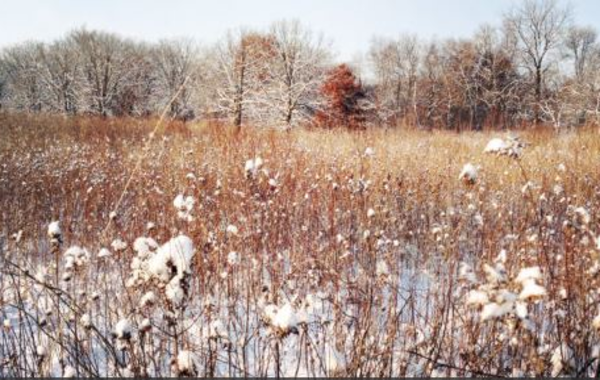 UW-Madison Arboretum Walk: Winter Birds