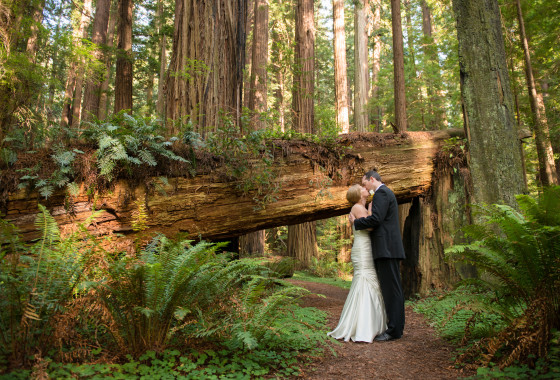 Weddings in Redwood National & State Parks