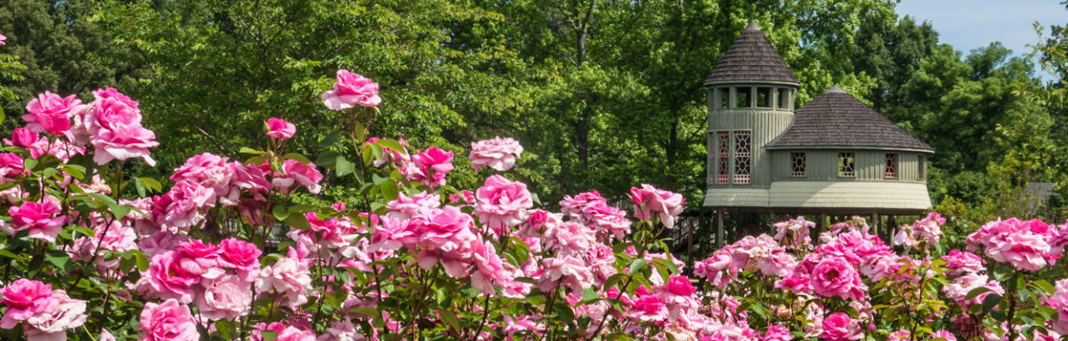 Lewis Ginter Botanical Garden RoseFest
