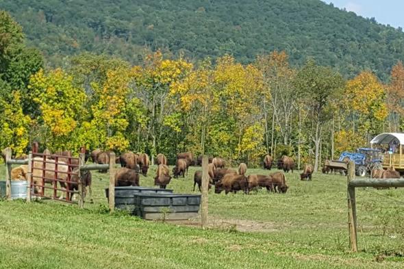 Mud Creek Bison Ranch