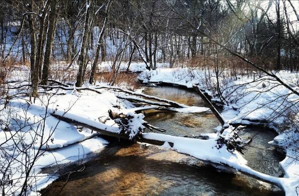 Beaver Park Winter