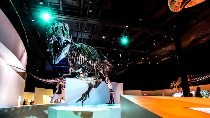 Houston Museum of Natural Science Tyrannosaurus Rex Exhibit