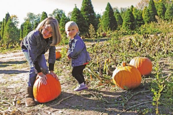 Stonycreek Pumpkin