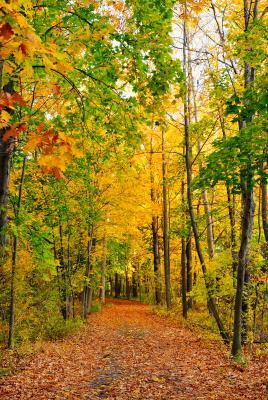 fall-hiking-trail