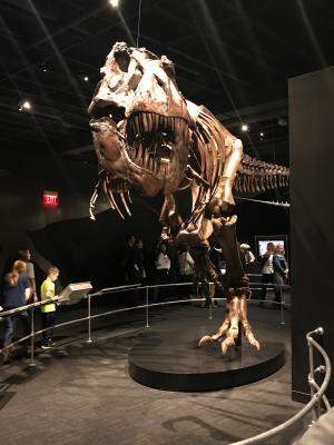 COSI T-Rex