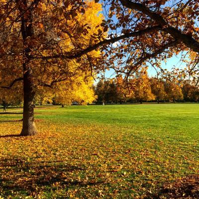 Cheesman Park Fall