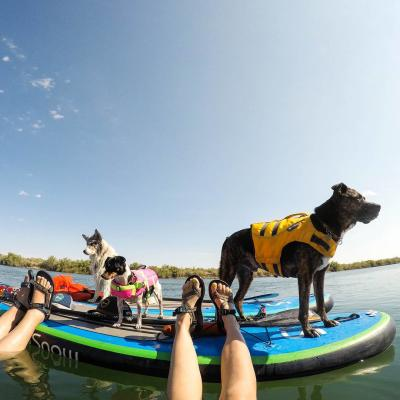 Paddleboarding Dogs No Snow SUP Salt River - Crowdriff