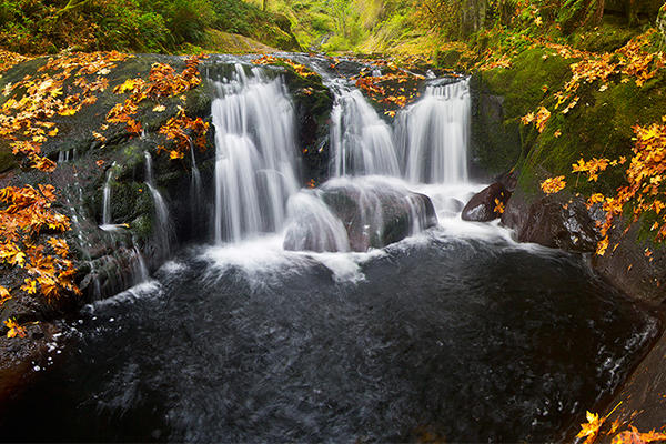 Sweet Creek Falls in Autumn by David Putzier