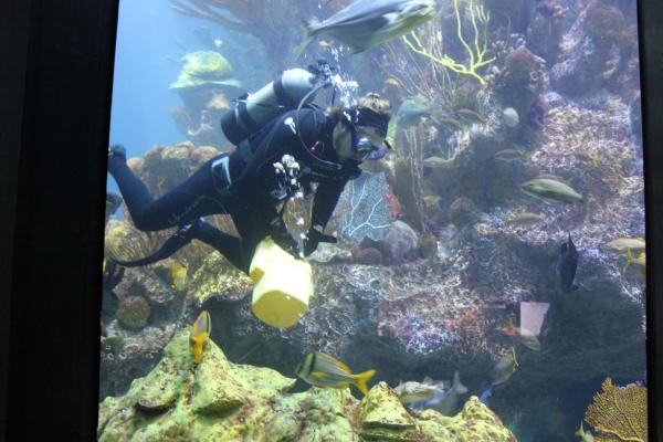 NEAQ Diver