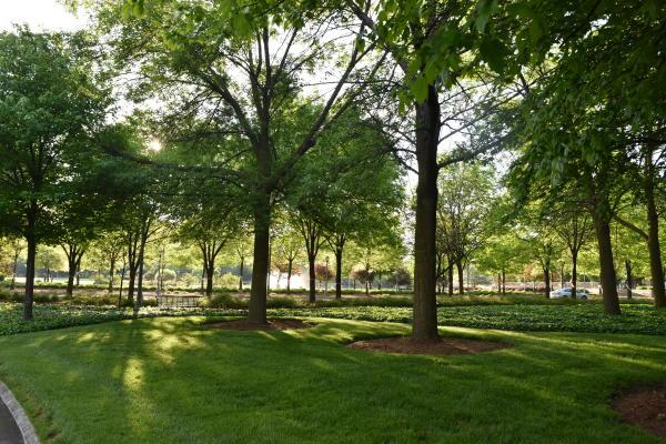 Headwaters Park in the Morning - Fort Wayne, IN