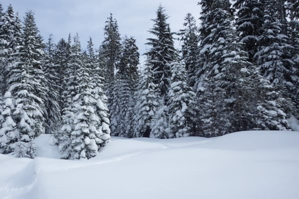 Snowshoeing landscape by Joey Jewell