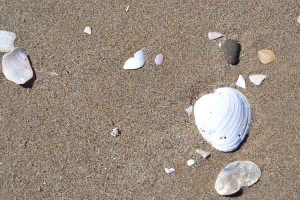 Beachcombing by Sally McAleer