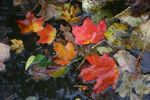 Fall Leaves by Traci Williamson