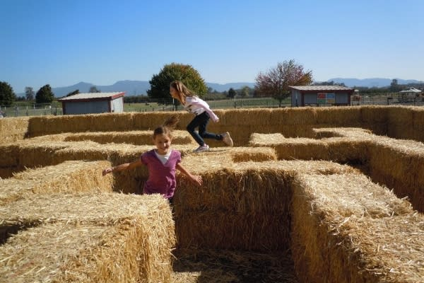 Lone Pine Farms Haymaze by Lisa Lawton