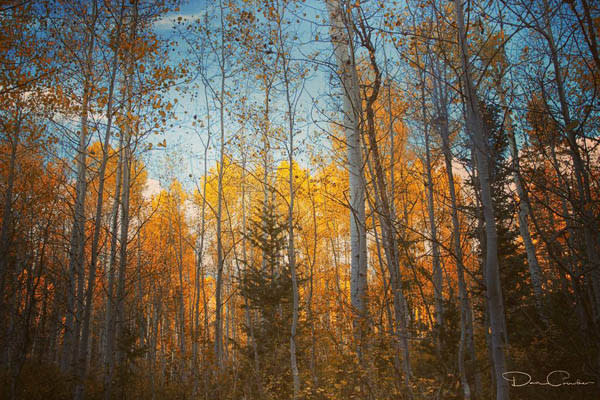 Scenic Drives to See Fall Colors in Utah Valley