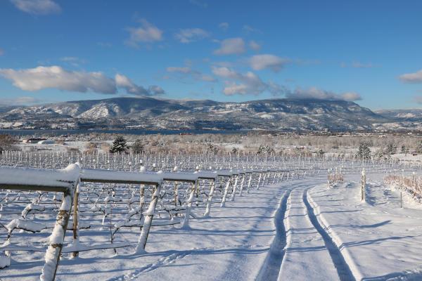 Experience Wine Tours - Tantalus Winter
