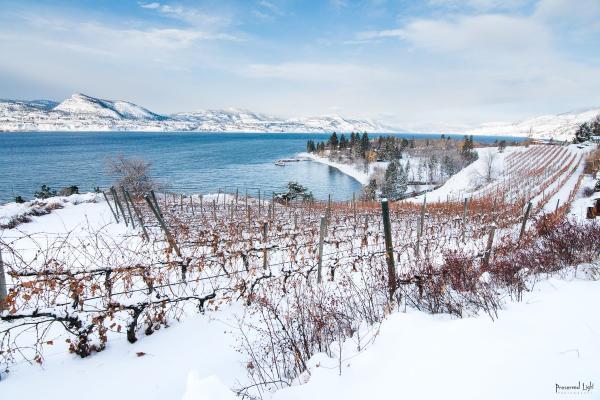Cheers Okanagan Winter Package Pictures