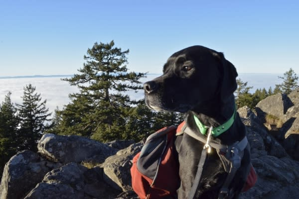 Hiking Spencer Butte with a Dog by Alisha Snyder