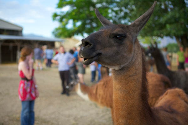 Where to Have Adorable Animal Experiences in Utah Valley