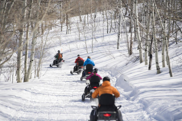 A Group of Snowmobilers in the Forest