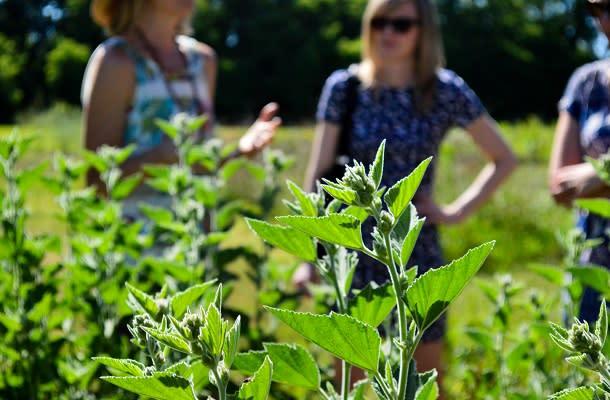 Wildflower Teas garden