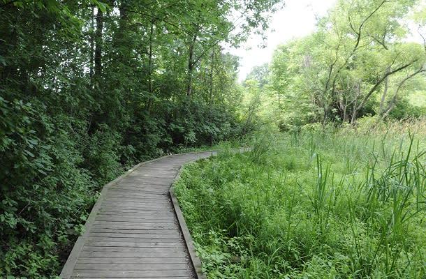 Dorchester Mill Pond Trail