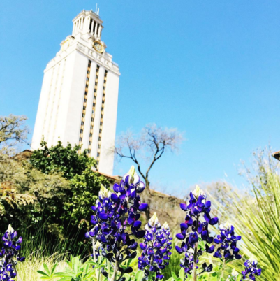 Bluebonnets blooming in front of the UT Tower