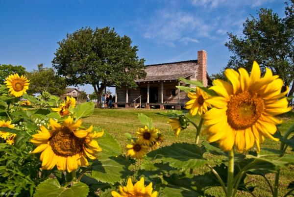 Sunflowers │ George Ranch