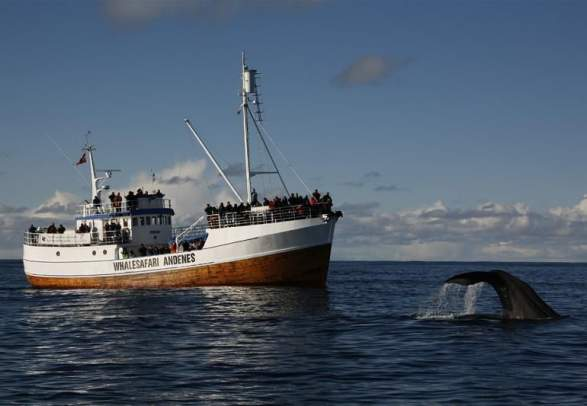 Whale safari in Andenes
