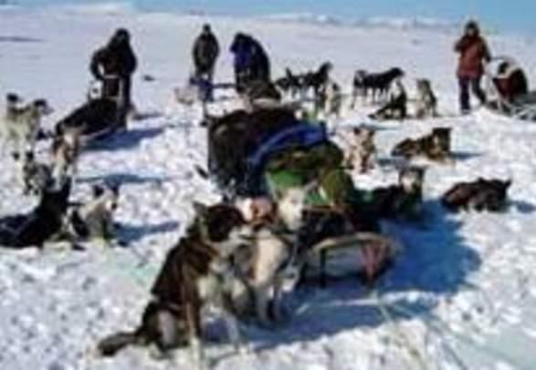 Hundslede ekspedition til Ishavet med Engholm Husky