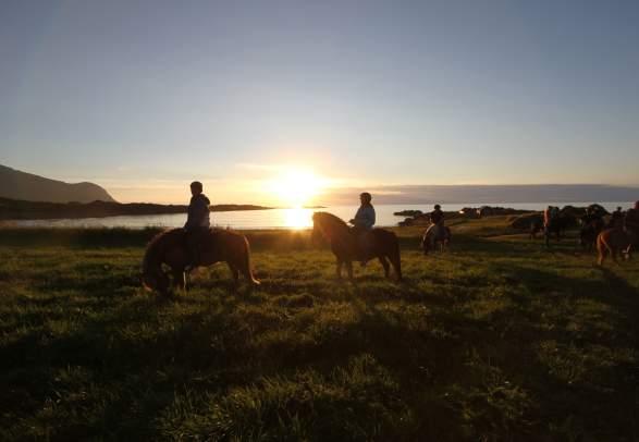 Lofoten by Horse - Horsebackriding on Icelandic Horses in Lofoten (copy)
