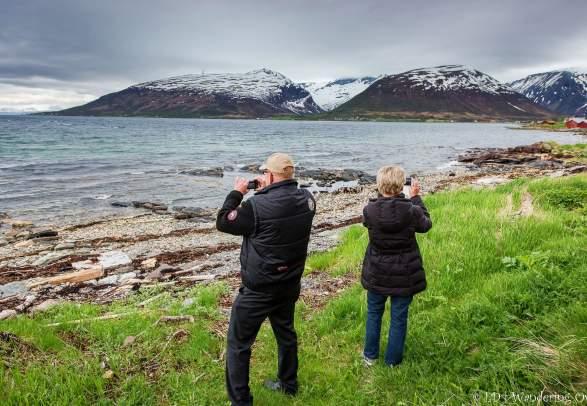 Arktisk natur i et nøtteskall - Wandering Owl