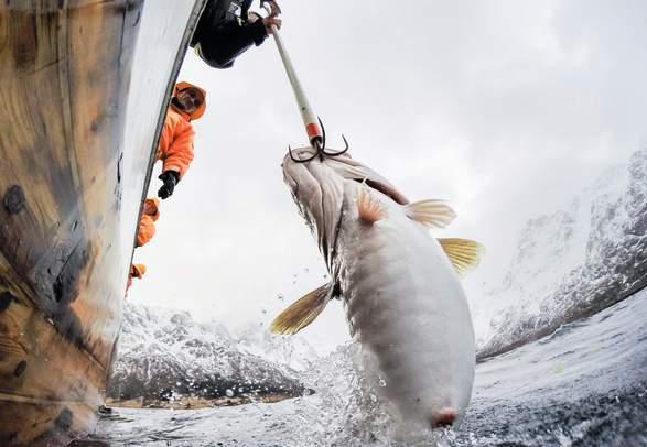 Traditional fishing trip from Svolvær - XXLofoten