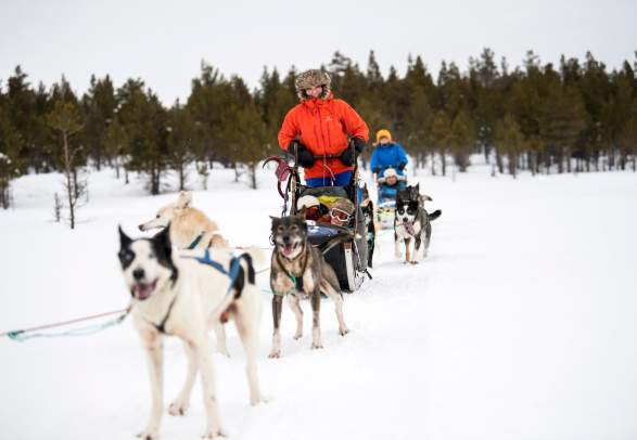 Dog Sledding Tours in Sjodalen-Jotunheimen
