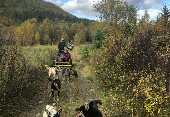 Dogsledding on wheels - Active North