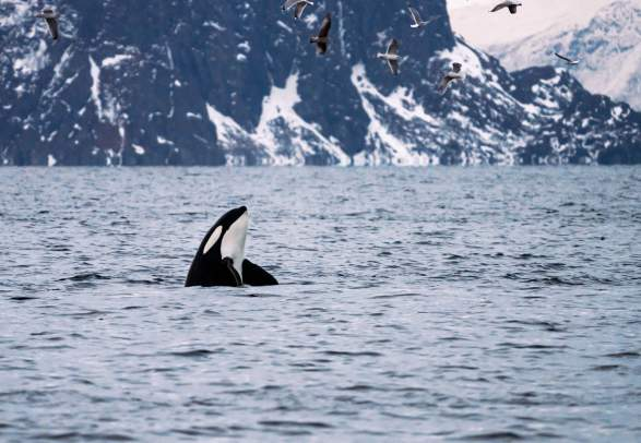 Silent Whale Watching
