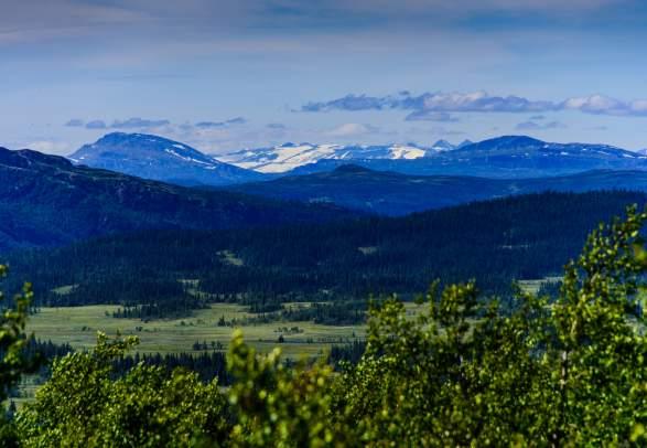 Elgland - Home to the Moose
