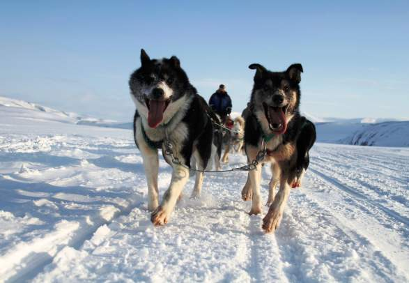 Dog sledding in Bolterdalen - Green Dog Svalbard