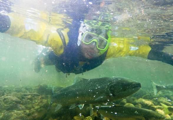 Salmon Safari in Suldalslågen in Sand