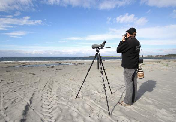 Lista Vogel-Observatorium - Vogelbeobachtung in Lista