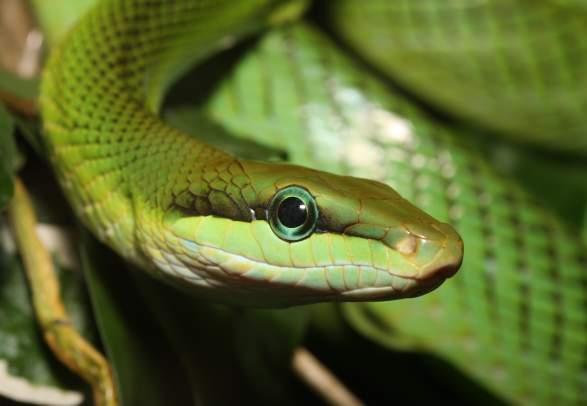 Parque de Reptiles de Oslo