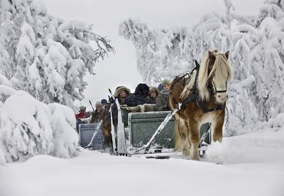 Horse Sleigh Rides | Venabu Fjellhotell