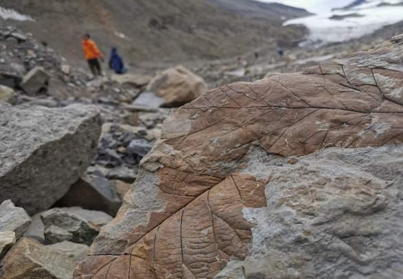 Fossiljakt med kløvhund - Green Dog Svalbard