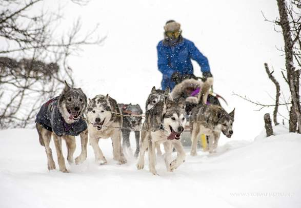 Fahrt im Hundeschlitten, Venabu Fjellhotell
