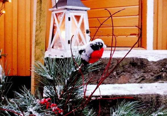 """Pre-Christmas"" at Gulburet"