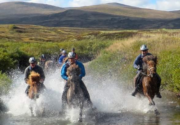 Opplevelser på hesteryggen - Mesna Opplevelser & Overnatting