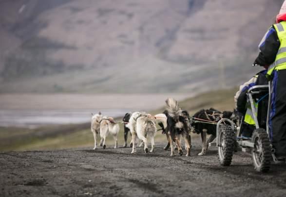 Hundeschlittentor auf Rädern. Basecamp Spitsbergen