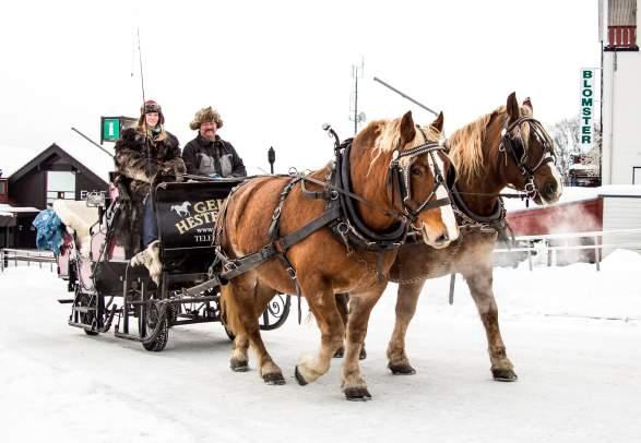 Horse-Drawn Sleigh Ride - Geilo hestesenter