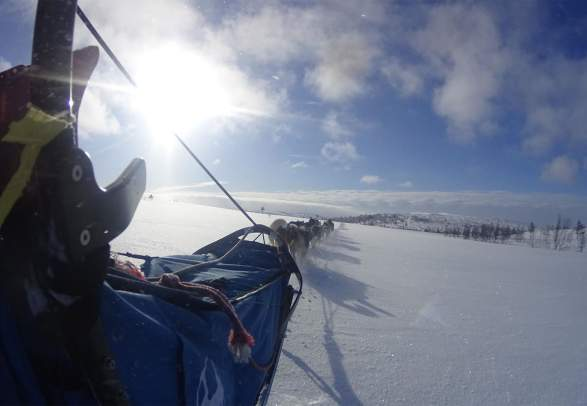 Dogsledding in Fageråsen